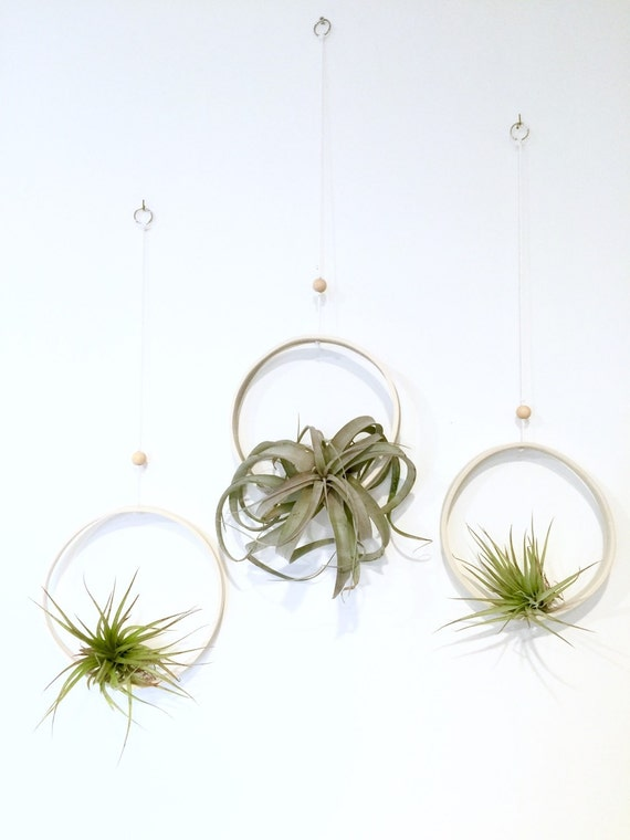 Airplant Ring Cradle Sling Hanging Planter Display for Air Plant MADE TO ORDER #airplant