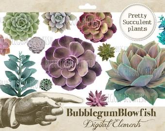 Gorgeous colorful Succulent Plants Digital Graphic Design Elements