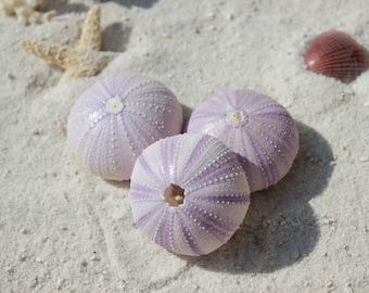 Lavender Sea Urchins Case pack 3