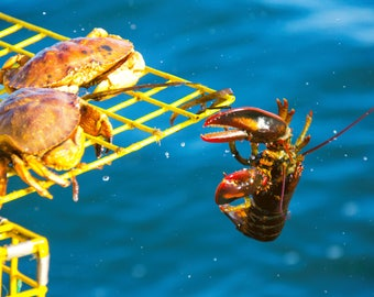 Crab and Lobster Crabs Pushing off Lobster Portland Maine Harbor thetravelingcamera