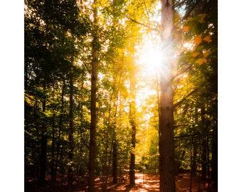Walk in the Woods III - Arcadia Bluffs Sleeping Bear Dunes