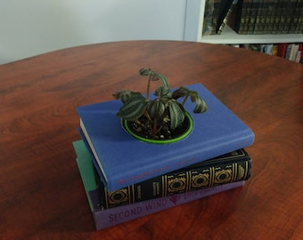 Handmade, Decorative, Upcycled Book Planter, Coffee Table Centerpiece
