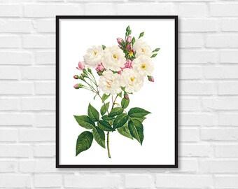 Floral Print / Botanical Print / Floral Clipart / Vintage Flower Illustration Print / DIY / Roses Print / Floral Print / Art Print [24]