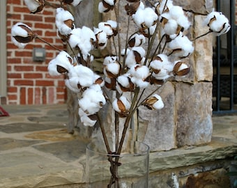 Rustic Cotton Stems with 15-18 Bolls per Stem for Rustic Farmhouse Decor~30-32 inches Tall~Preserved Bolls~Faux Cotton~Country Chic~Min 3