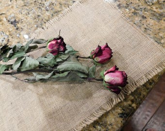 Dried Roses, Roses, Burgundy roses