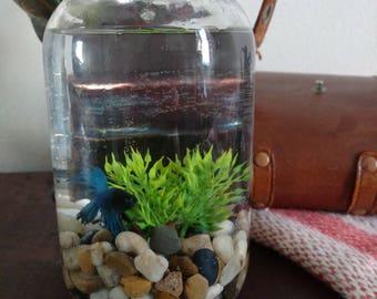 Betta fish bowl   Etsy