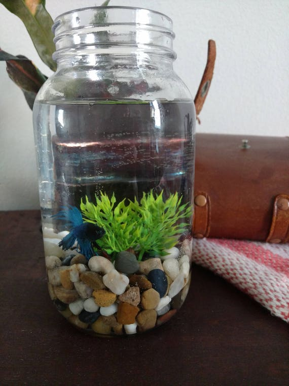 Fish jar betta fish aquarium betta fish tank desktop fish for Best place to buy betta fish