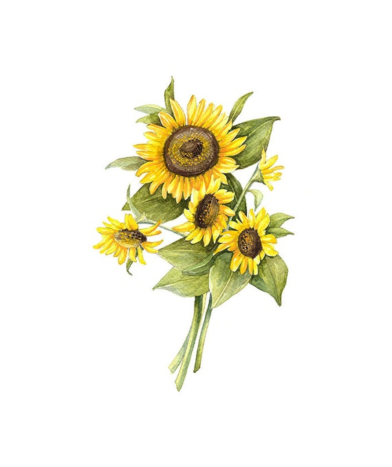 Gratifying image in printable pictures of sunflowers