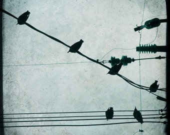 Blue Crows Wires Photograph--Crow Central--TTV Fine Art