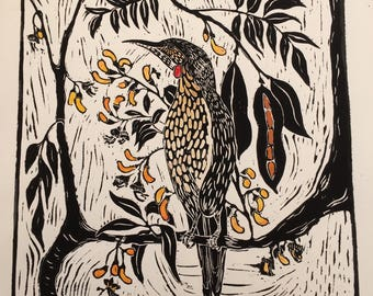 Wattle-Bird and Black Bean Tree