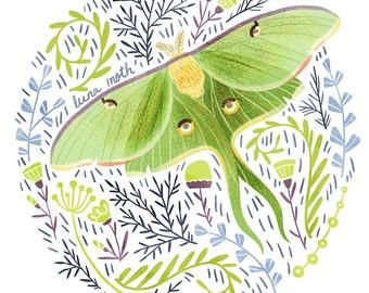 Luna Moth Art Print - square digital illustration by Stephanie Fizer Coleman