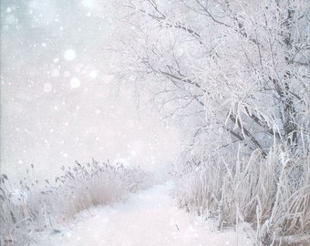 "Winter landscape photography icy white woodland trail forest snow pale pastel -""Winter Wonderland""  8 x 10"