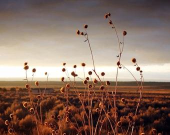 Utah Desert Flowers Nature Photography print