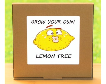 Unusual Windowsill Gardening Gift - Grow Your Own Lemon Tree Plant Kit - Quirky gift for men or women