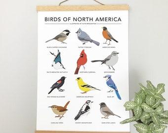 Birds of North America print - Garden Bird poster - wildlife wall art, nature illustrations, birdwatching chart, nature gift, new home gift