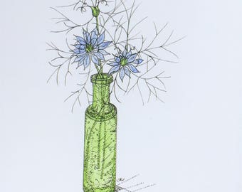 Love-in-a Mist. A4 colour print from an original pen & watercolour drawing.