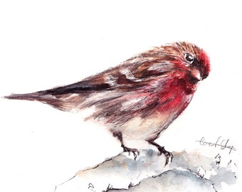 Chickadee Bird Original Watercolor Painting, Red Bird Watercolour Art, Bird Art, Painting of chickadee bird