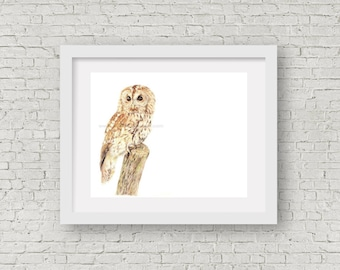 Owl print, owl illustration, bird print, bird art, bird lover gift, wildlife print, owl decor, nursery decor, animal lover gift