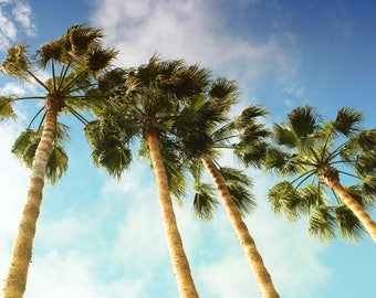 Tropical Vibes, Palm Trees, Sky, Clouds, San Diego, California