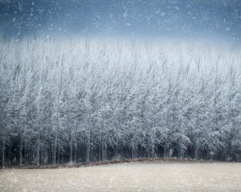 Winter Print, Snow Photo Landscape Photography Winter Forest Trees Dreamy Wall Art Home Decor Gift Ideas nat109