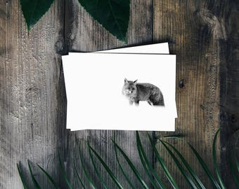 10X15, Travel photography, Fox, Black and white, Nature