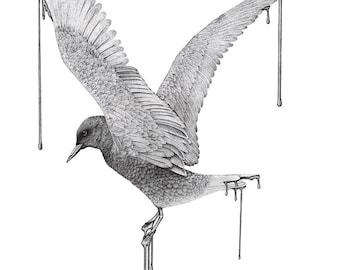 ORIGINAL Flying Black Tern, arctic bird illustration, sea bird drawing, pen and ink pointillism art stippling, original artwork, winter bird