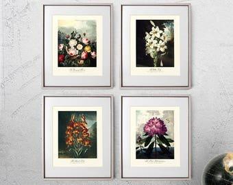 Botanical Art Pack, Bloom Poster Set, Decor Art Pack, Botany Kitchen Decor, Gift for Sister Art, Christmas Gift Art - E9Set42