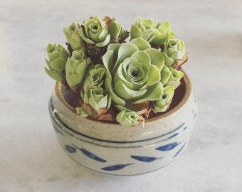 Rare Succulent-White and blue Ceramic Planter with Drainage Hole