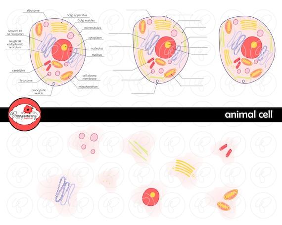 Tierzelle Lehrer für Naturwissenschaften Diagramm Clipart Set