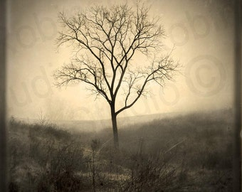 Tree of Life. Black and White. Original Digital Art. Photograph. Wall Art. Wall Decor Giclee Print. MORNING FOG by Mikel Robinson