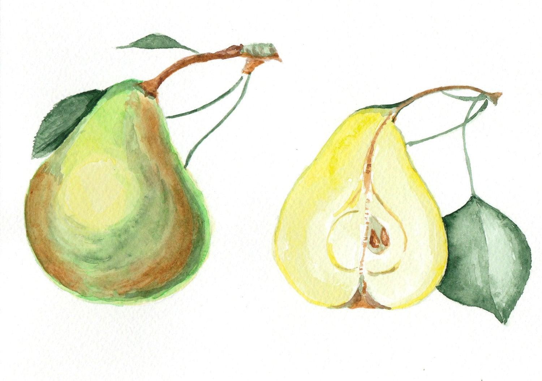Original Watercolor Pears Botanical Illustration Fruit