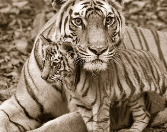 Safari Nursery Decor, BABY TIGER and MOM Photo, Vintage Sepia Print, Baby Animal Photograph, Wildlife Photography,  Nursery Art, Safari, Zoo