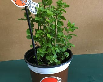 Spearmint Plant in a Cleveland Browns Team Pot with Helmet Plant Tag