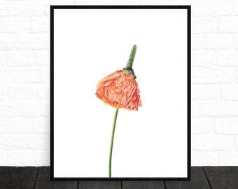 Flower Wall Art, Red Flower Wall Art, Large Flower Poster, Spring Print, Floral Decor, Printable, Botanical Art, Floral Artwork, Poppy Red,