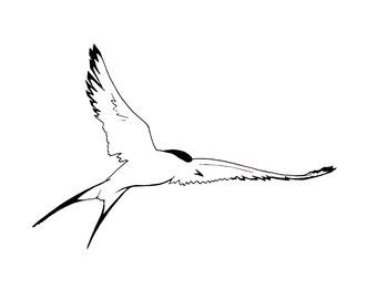 Arctic Tern Flying Bird Illustration