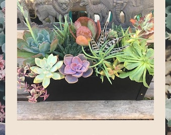 Premier Designers Choice- Succulent Arrangement