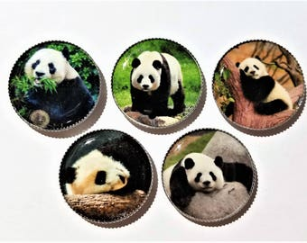 Panda Bears magnets, animals from china, black and white bears, baby panda, bottle cap magnets, panda party favor, magnet board accessory