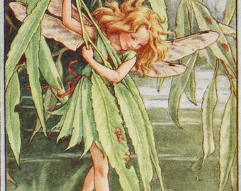 Flower Fairies: THE WILLOW FAIRY Vintage Print c1930 by Cicely Mary Barker