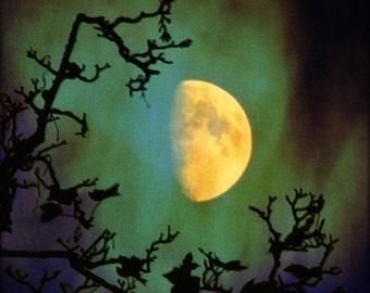 Moon print, Mystery- waxing half golden moon, stormy green sky, surreal moon photo, moon art, emerald green sky, tree silhouette, dreamy
