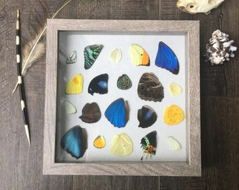 Butterfly wing display 1