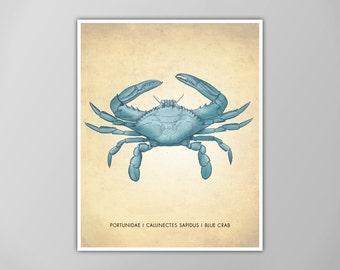 Blue Crab Art Print, Nautical Art Print, Blue Crab Natural History Poster, Natural History Scientific Print, Blue Crab Art Print, Blue Crab