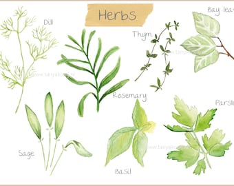 Watercolor Herbs digital clipart - watercolor illustrations in high resolution PNG files