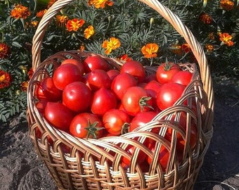 Red Oxheart Tomato, 10+ heirloom seeds