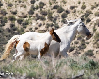 Harmony in Motion, Bonita & Chico - Wild Horses of Sand Wash Basin - 10x20 Gallery Wrapped Canvas Print