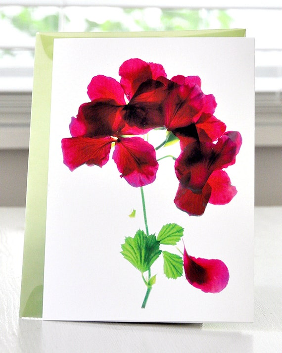 Floral note card--Alice Geranium Invitation Thank You Celebration Thinking of You Cards