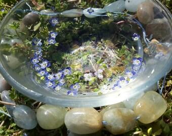 Speedwell + Aquamarine ~ flower and gemstone essence