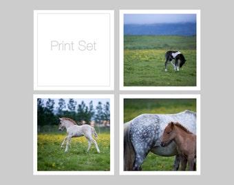 Nursery wall decor set 25% OFF - Foals print set of 3 - Iceland baby horse photos - Small art gift - Stocking stuffer - 5x5 square  Farm art