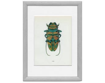 Long-horned, or Longicorn Beetle (133) Vladimir Bohac, 1965, Bug Creepy Crawly, Frameable Art, Vintage Print,