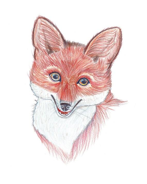 Ritratto rosso volpe volpe di disegno matite colorate for Disegni a matita di cani