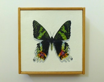 6x6 Sunset Moth Original Painting